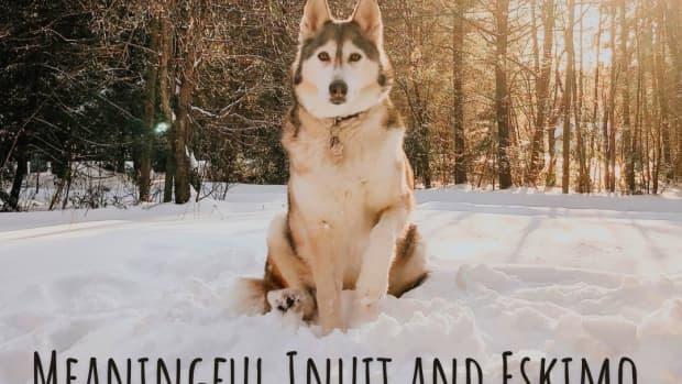 eskimo-husky-names
