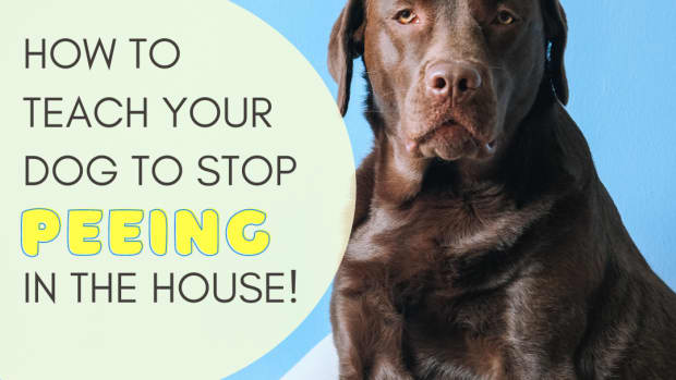 how-to-get-your-dog-to-stop-peeing-all-over-the-house