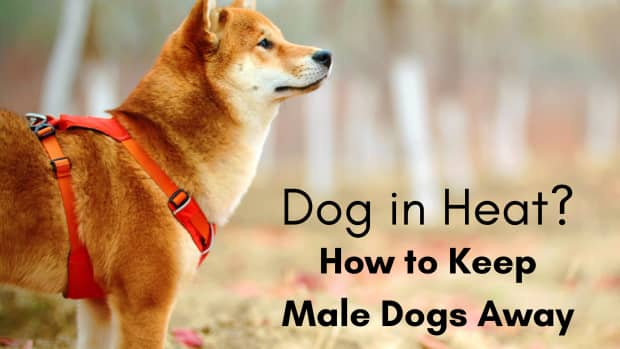 how-to-keep-male-dogs-away-from-females-in-heat