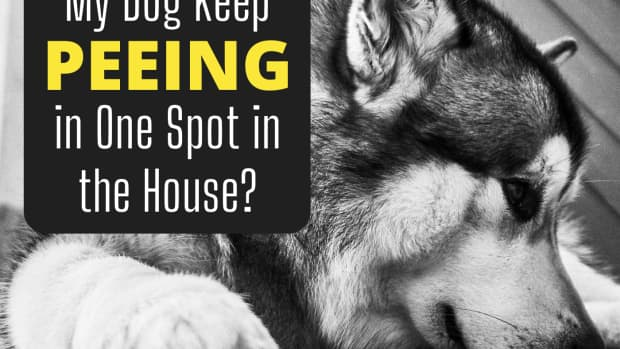 why-your-dog-keeps-peeing-in-the-same-room-of-your-house-over-and-over