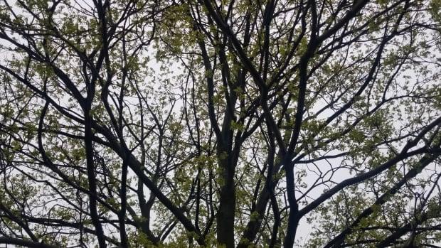 forest-rain