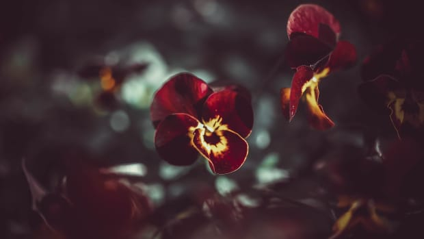 best-ornamental-flowering-plants-for-the-winter-season