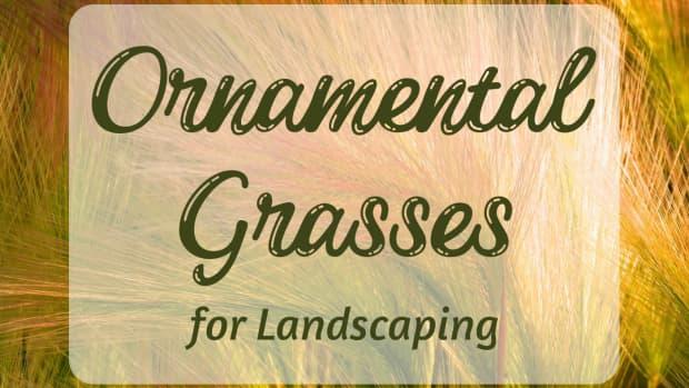 ornamental-grasses-a-unique-landscaping-choice