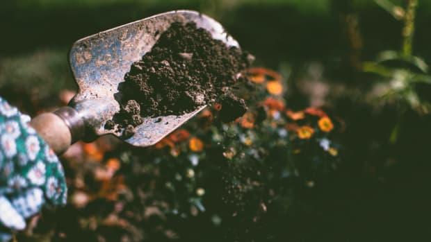 making-using-soil-samples