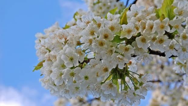 beautiful-southern-trees-and-flowers