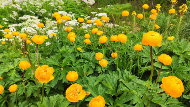 3-best-flowering-plants-to-grow-in-shady-areas