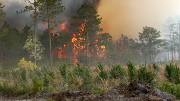 controlling-forest-fires-and-stock-market-bull-runs