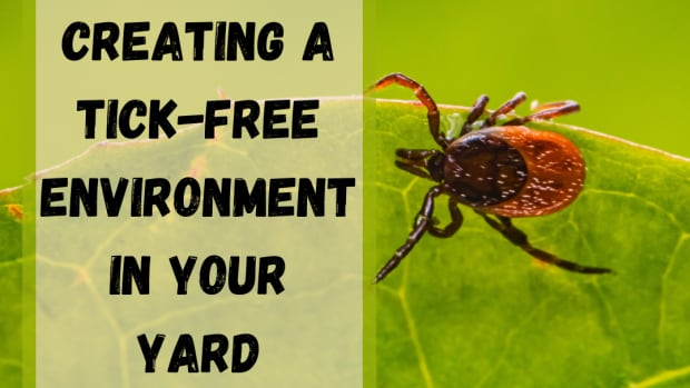 design-a-tick-free-environment-to-keep-ticks-out-of-your-yard
