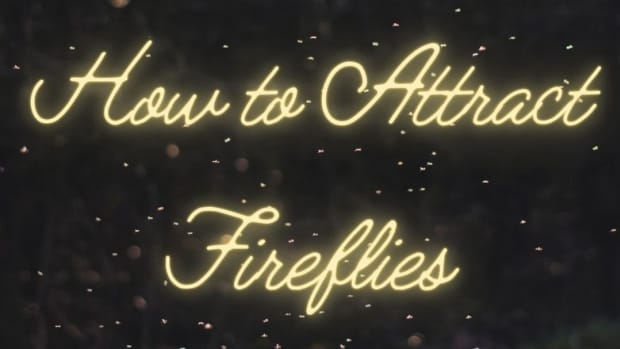 how-to-attract-catch-fireflies