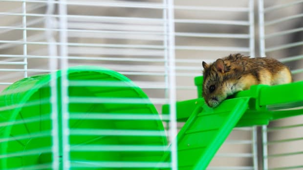 the-best-affordable-hamster-cages-list