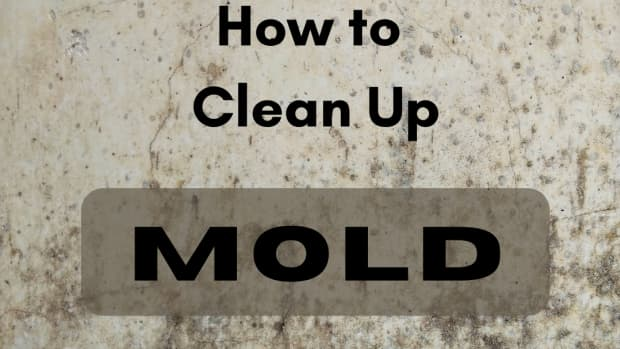 why-you-need-a-professional-for-mold-removal