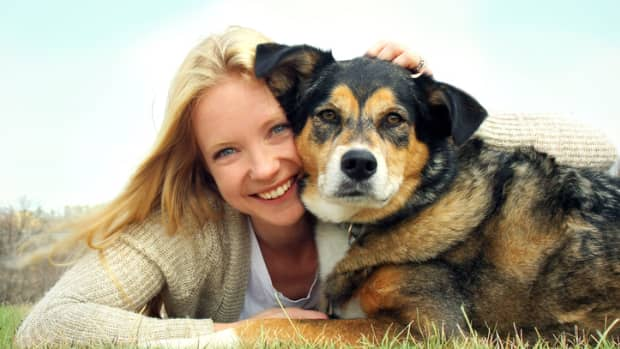 9-tips-to-help-self-aging-dog-adjustments-kids-family-trained-pets-dog-home-pets-health-pets-care-