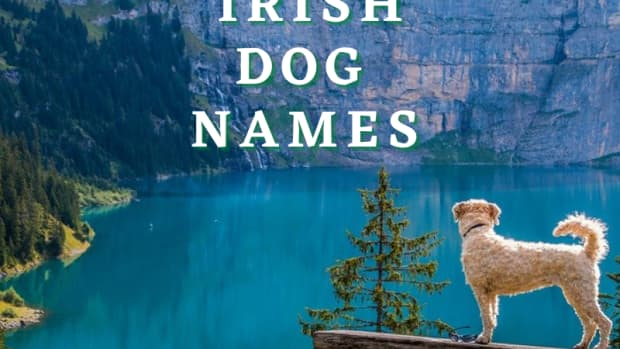 175-irish-dog-names-with-meanings