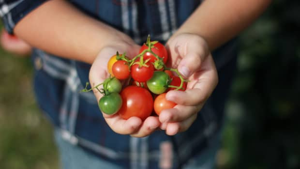 how-to-choose-the-best-tomato-variety-to-grow-6-tips