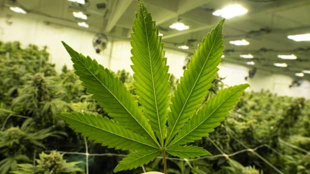 5-reasons-why-marijuana-should-be-legalized