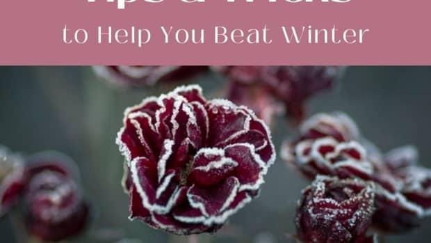 beat-winter-with-an-indoor-garden