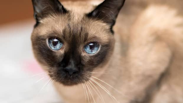 the-fascinating-story-of-the-cat-who-authored-a-science-paper