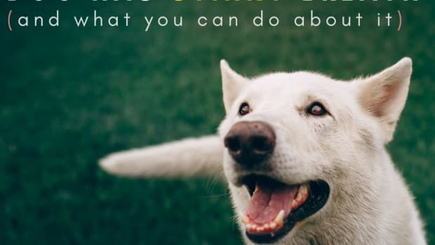 why-does-my-dog-have-bad-breath-possible-causes-and-solutions