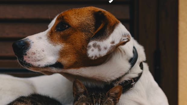is-general-anesthesia-safe-for-my-pet