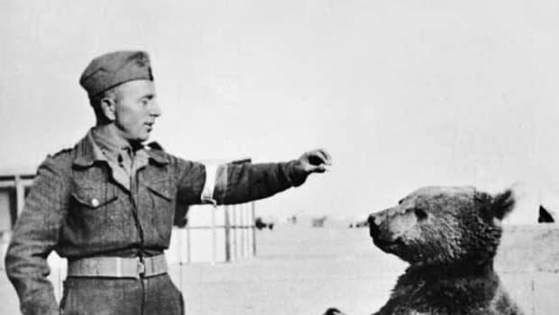 wojtek-the-bear-polish-soldier