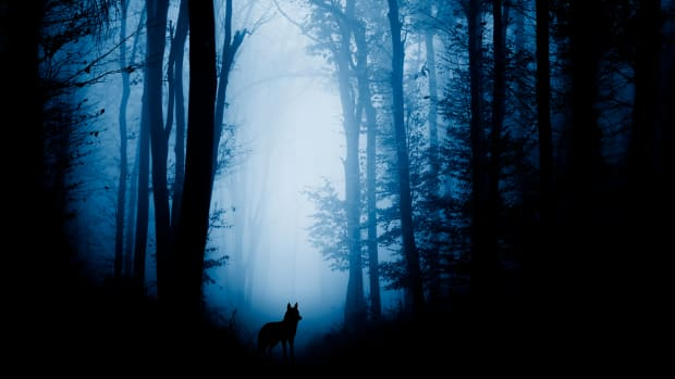 the-wolf-in-the-forest