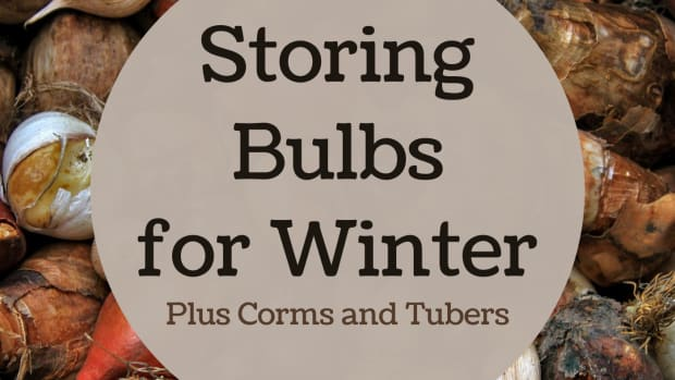 how-to-store-bulbs-for-the-winter