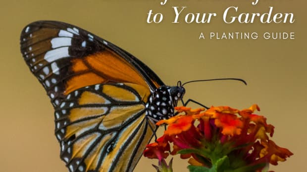 how-to-encourage-butterflies-to-visit-your-garden