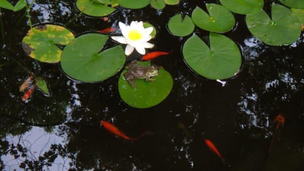 build-a-garden-pond