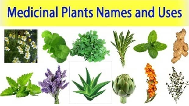 medical-plants-and-their-benefits