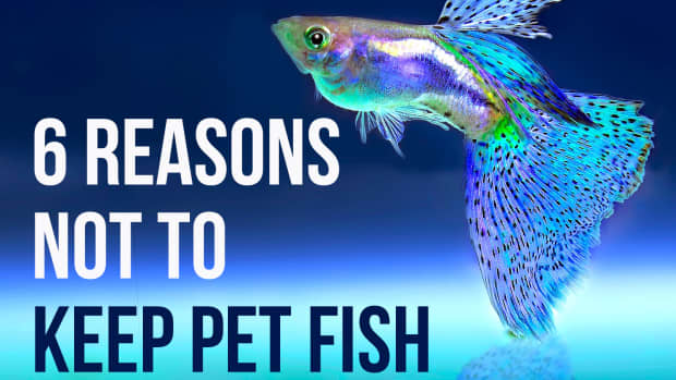 reasons-not-to-have-pet-fish
