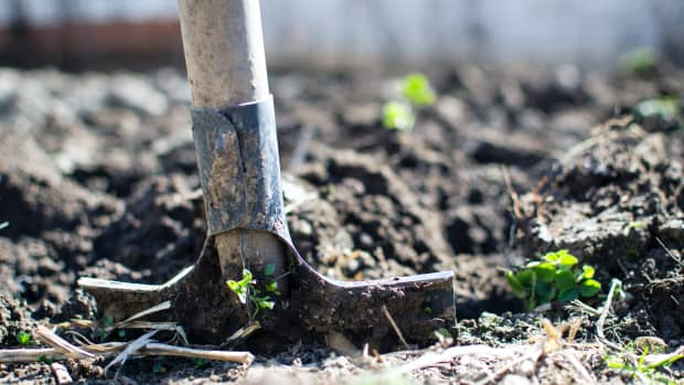how-to-determine-your-soil-type-for-planting-success
