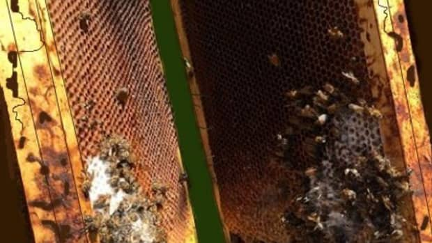 how-get-rid-molds-beehive