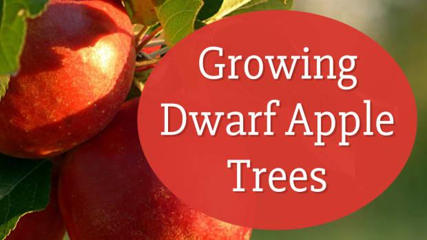 how-to-grow-a-dwarf-apple-tree