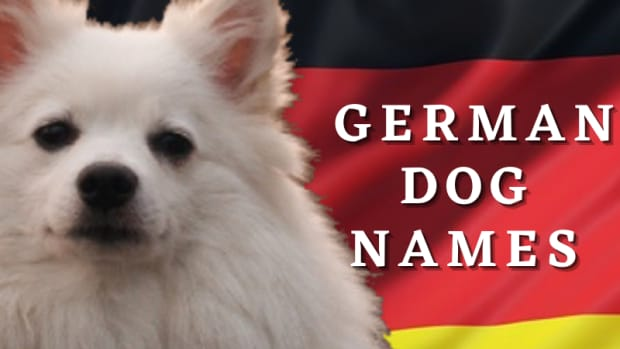 200-german-dog-names-with-meanings