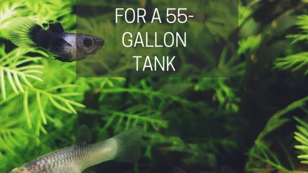 best-fish-for-a-55-gallon-tank