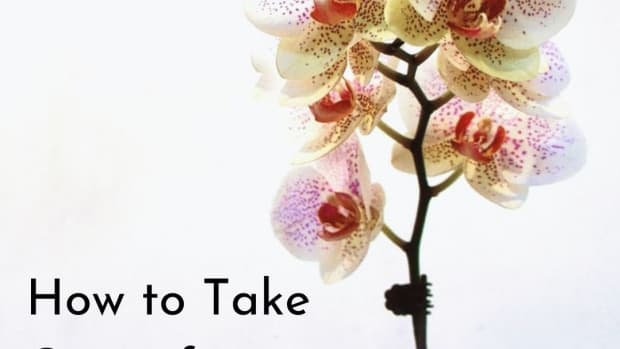 how-to-take-care-of-potted-orchids
