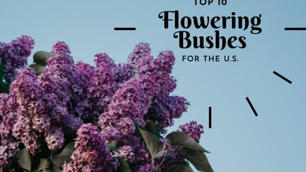 flowering-shrubs-and-bushes