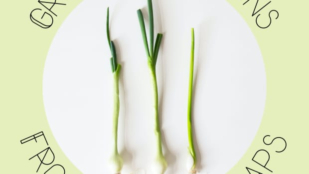 how-to-grow-green-onions-from-kitchen-scraps