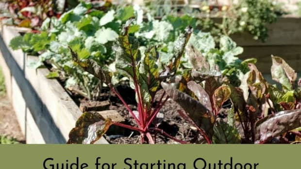 planting-in-the-spring