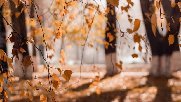the-leaves-are-on-fire-a-poetic-tribute-to-the-beauty-of-autumn