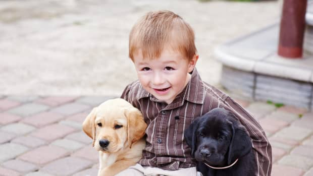 3-mostly-adopted-dog-breeds-for-kids-and-families