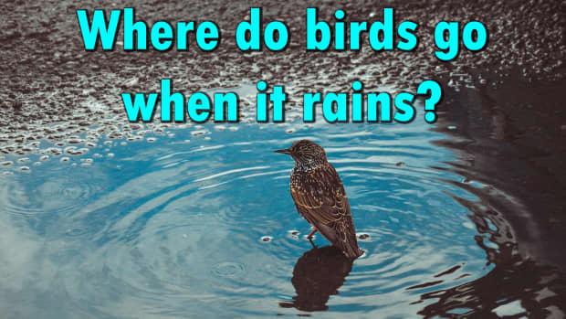 where-do-birds-go-when-it-rains