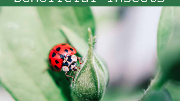 useful-insects-for-plants