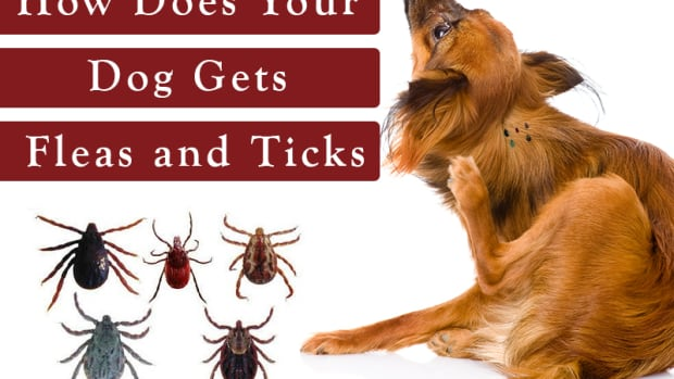 how-to-prevent-ticks-and-fleas-on-dogs-super-natural-ways