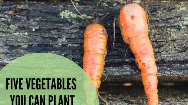 five-delicious-vegetables-to-plant-in-june