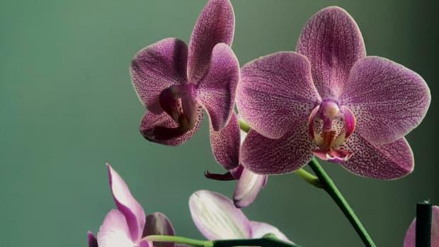 rehabilitating-sick-orchid