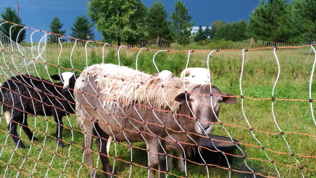rotational-grazing-with-electric-net-fences
