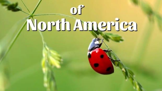 beetle-identification