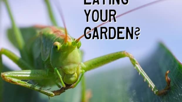 whats-eating-your-garden-leaves