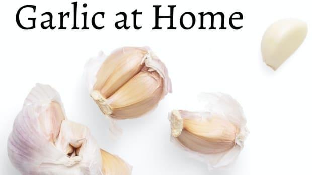 planting-garlic-at-home